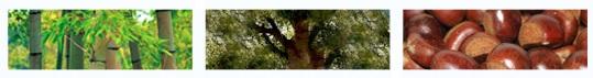 o5b20e24f9e561-bamboo-dewdrop.jpg