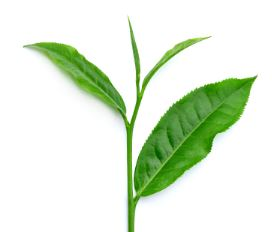 w5b5082fb3de0b-green-tea.jpg